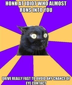 Anxiety Cat: What if He Follows Me?!