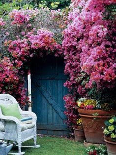 Find essential growing information on bougainvillea, including: flower and foliage colors, height and width, seasonal features and special features. Check out more information about bougainvillea care and explore tips on how to grow bougainvillea. Garden Cottage, Home And Garden, Garden Nook, Cacti Garden, Roses Garden, Garden Oasis, Garden Living, Fruit Garden, Love Flowers