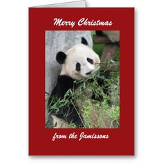 """Merry Christmas Greeting Card Panda, Red Border -  Merry Christmas Greeting Card Panda, Red Border (Edit 