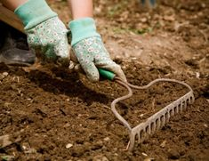 How to Plant a Flower Garden Best details for beginners! 2019 How to Plant a Flower Garden Best details for beginners! The post How to Plant a Flower Garden Best details for beginners! 2019 appeared first on Flowers Decor. Vegetable Garden For Beginners, Gardening For Beginners, Gardening Tips, Organic Gardening, Urban Gardening, Indoor Gardening, Vegetable Gardening, Gardening Books, Diy Garden