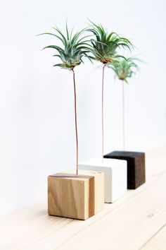 Palm Tree Wood Block // Air Plant Stand // Wood by GemsOfTheSoil