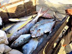 Dorades coryphene en petit volume  Myanmar 2014