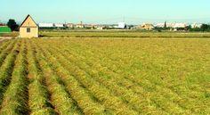 Huerta de Valencia Valencia City, Cadiz, Urban Farming, Shanghai, Vineyard, Spain, Outdoor, Mood, Fields