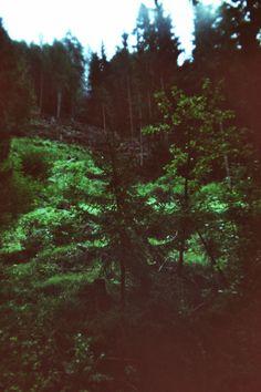 Woods   Holga, Analog Photography