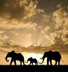 Beautiful African Sunset