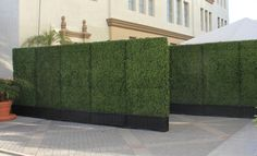 Artificial Hedge Panel | Town & Country Event Rentals