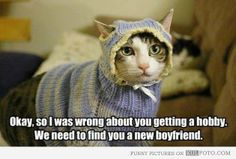 "Funny cat in knitted sweater and hat: ""Okay, so I was wrong about you getting a hobby. We need to find you a new boyfriend."""