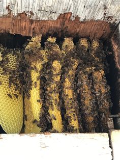 Oahu beekeepers say more bees are migrating into urban neighborhoods looking for shade and water.