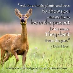 Ask the animals... #creativeedge #dainheer