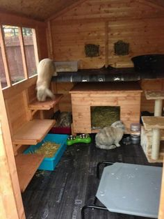 Bunny Sheds, Rabbit Shed, House Rabbit, Rabbit Toys, Pet Rabbit, Outdoor Rabbit Hutch, Indoor Rabbit, Bunny Cages, Rabbit Cages