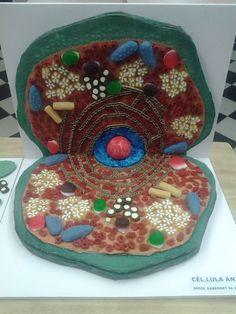 Cèl·lula animal. Una maqueta magnífica feta per un alumne de 5è de primària. Celula animal
