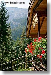images/Europe/Italy/Dolomites/Flowers/balcony-geraniums.jpg