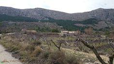 Ruta circular Alcoleja-Font de l'Arbre. Una agradable ruta por la sierra más alta de la provincia de Alicante
