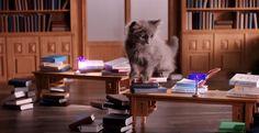 "Whiskas Opens An Absolutely Adorable ""Kitten Kollege"" Viral Marketing, Guerilla Marketing, Funny Ads, Favorite Subject, Kittens, Cats, Branding Design, Feels, Animals"