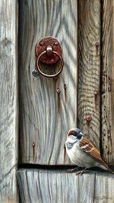 Musa AKKAYA, Kuşlar