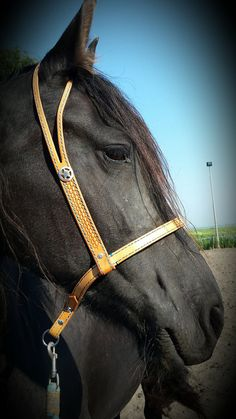 Bitless bridle bosal-esteem bridle by Exclusive Bitless & Western on Etsy