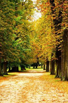 Marie Antoinette's Gardens surrounding the Grand Trianon, Versailles. (autumn)
