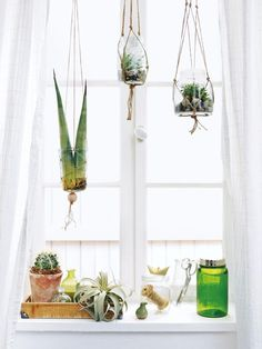 macramé hanging terrarium jars