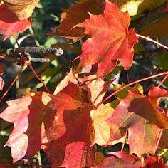 Love the colours of autumn/fall
