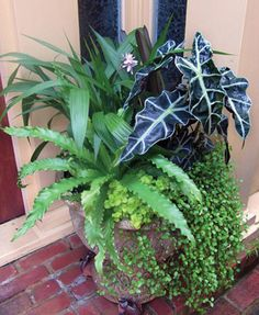 Zebra plant, Bird's Nest fern, Sparkling Burgundy, Creeping Jenny, Creeping Wire vine, Chinese Ground Orchid