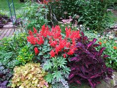 mixed plants flower bed