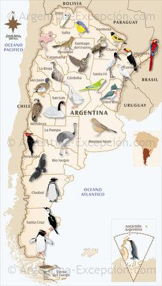Birds of Argentina (and Falkland Islands) Teaching Latin, Getting A Kitten, South America Map, Argentina Travel, Chili, Wine Country, Bolivia, Spanish, Wildlife