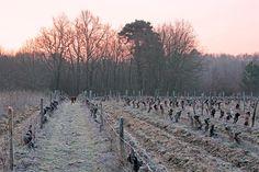 Saint-Aignan-sur-Cher Vineyards, Loire Valley, France
