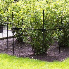 Buskstödet hjälper till att hålla grenarna från marken. Förenklar både gräsklippning och ogräsrensning.