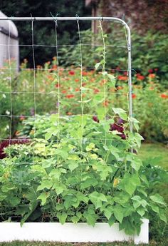 Possibility for veggie garden- vertical trellis for cucumber squash etc- Square Foot Gardening Store Gardening Books, Small Space Gardening, Container Gardening, Vegetable Gardening, Tomato Trellis, Garden Trellis, Potager Garden, Growing Tomatoes In Containers, Grow Tomatoes