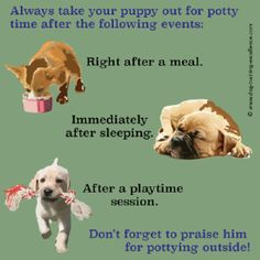 what is the best way to potty train a puppy