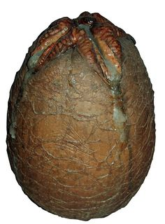 Alien facehugger egg