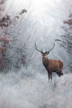 Deer Picture -- Winter Photo -- National Geographic Photo of the Day