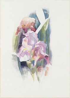 Charles Demuth (American, Lancaster, 1883–1935). Purple Iris, ca. 1920. The Metropolitan Museum of Art, New York. Alfred Stieglitz Collection, 1949 (49.70.62)