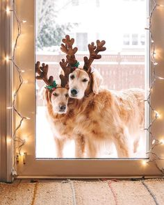 Its Christmas Eve, Christmas Themes, Christmas Porch, Holiday, Beach Flower Girls, Animal Pictures, Cute Pictures, Animals And Pets, Cute Animals