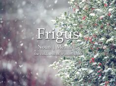 The origin of this word is from the Latin. The English definition, would be cold or coolness. Refrigerator ,Frigid and frigadare all come from this Latin word. The word enters English in the century. Unusual Words, Weird Words, Rare Words, Unique Words, Cool Words, Fancy Words, Words To Use, Pretty Words, New Words