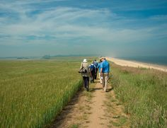 Low carbon green travel guide to Sussex Coast & Heaths Area of Outstanding Natural Beauty including places to stay, local seasonal food, low impact activities and visitor attractions.