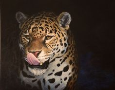 OUT OF THE DARK, a Jaguar painting by Kathrin Guenther. Acrylic on board, 16 inch by 20 inch. 310 Euro unframed or 380 Euro framed in a black frame Out Of The Dark, Graphite Drawings, Flora And Fauna, Wildlife Art, Jaguar, Panther, Equestrian, The Darkest, Art Paintings