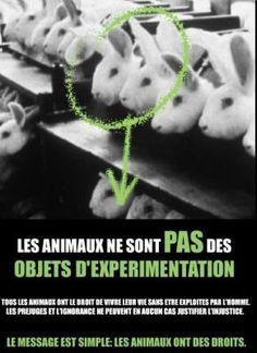 Les animaux sont des êtres vivant, pas des objets !!!