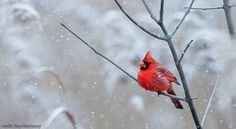 How to Attract More Birds to Your Backyard Bird Feeder