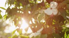 Free Sun Glare Wildlife Stock Video Footage - VideoBlocks