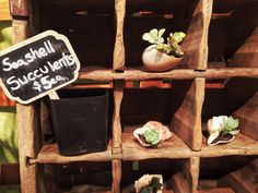 These are so adorable, in a succulent kind of way. Tiny succulents in sea shells, by Esther Lee. Holiday Market, Stocking Stuffers, Sea Shells, Ladder Decor, Succulents, Home Decor, Decoration Home, Room Decor, Seashells
