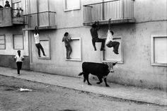 Gado à solta na Estremadura, em 1975.