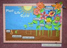 Spring bulletin board depicting the plant life cycle Elementary Bulletin Boards, Science Bulletin Boards, Spring Bulletin Boards, Preschool Bulletin Boards, Elementary Teacher, Elementary Education, School Board Decoration, Plant Lessons, Plant Science