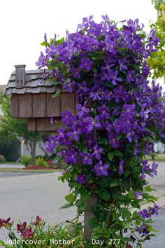 This is exactly how I want my mailbox to be decorated, except I'd rather have a more modern mailbox. But the flowers! So beautiful!