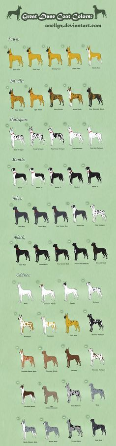 Great Dane Coat Colors - Adoptables (closed) by ~Anellyz on deviantART