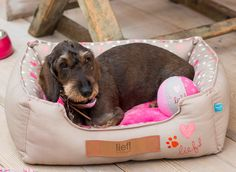 lief! lifestyle dierenaccessoires voor jouw hond | lief! lifestyle pet accessories for your dog