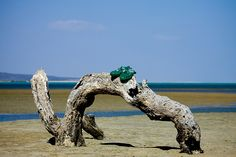 Sandals on a trunk, Khor Angar, Djibouti by Eric Lafforgue, via Flickr