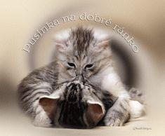 Make Me Happy Quotes, Good Night Quotes, Cute Cats, Iris, Vintage, Amor, Fotografia, Pet Pictures, Animales