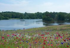 Five gardens by  Capability Brown