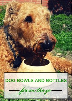5 of the Best Dog Water Bottles and Travel Bowls